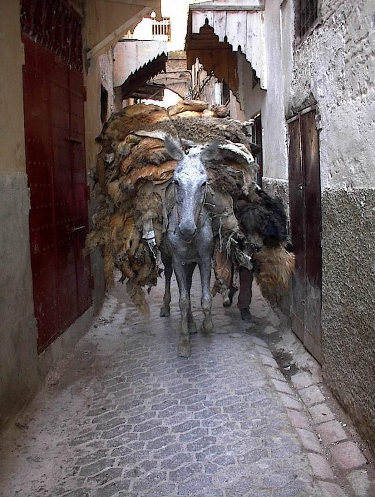 Donkeys at the Medina Fes el-Bali