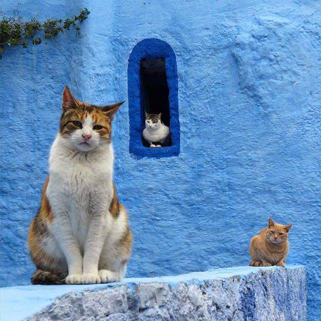 In Morocco, cats are sacred. In general, for the Arabs the dogs are not