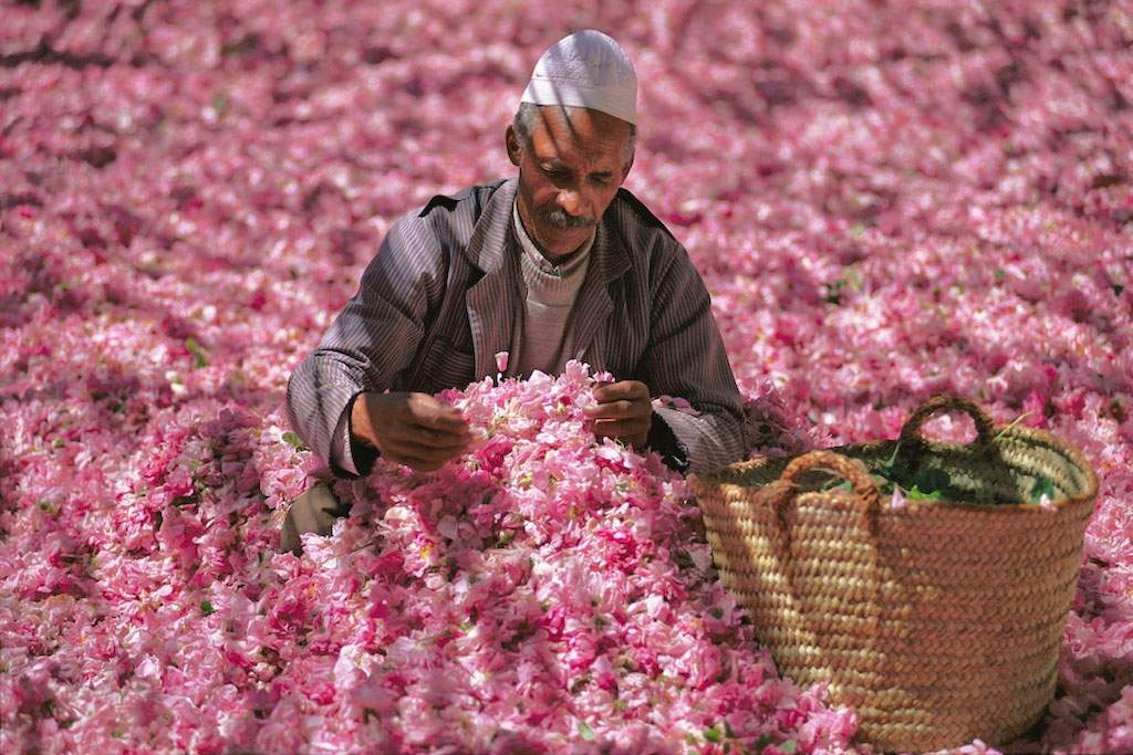Valley of Roses, Morocco